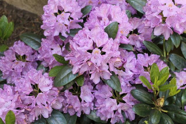 Todays color: purple!