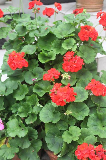 4th of July Garden